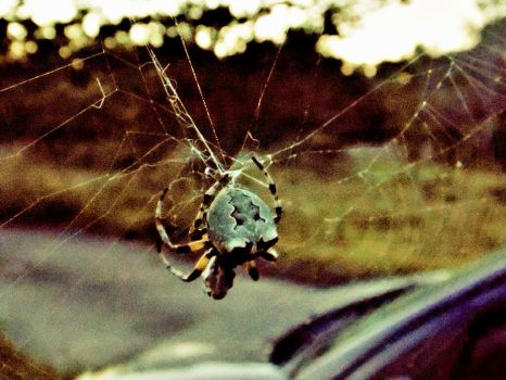 Spider by TheGerm84