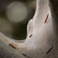 Creepy Crawlies by psychostange