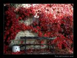 The old broken seat - autumn by Hocusfocus55