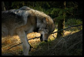 Fetch 04 by LoneWolfPhotography
