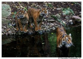 Mum and cubs by TVD-Photography