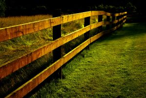 Sunlit Fence by designerfied