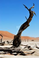 Namibia 10.3 by GreenMusic