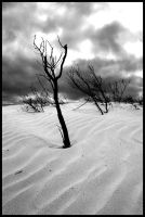 sand dunes black and white by jess1586