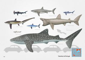 Portuguese Sharks by omnicogni
