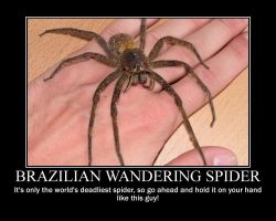 Brazilian Wandering Spider by Internet-Cancer