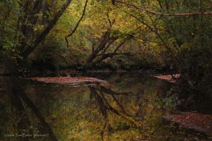 slow flowing autumn by photom17