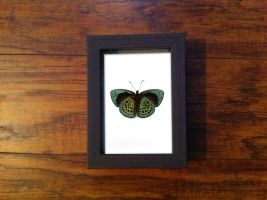 Charles Darwin Butterfly Study by TheButterflyBabe