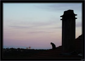 Cat on the roof by J-Y-M