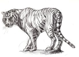 White Tiger sketch by Ezekiel-Black