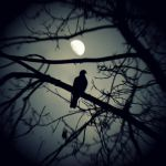 Moon Bird by lostknightkg