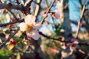 Peach Flower by almostkilledme