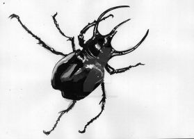 beetle ink sketch by reminisense
