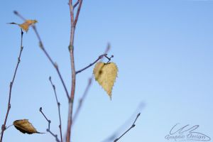 Last Leaf by AngelitoCaz