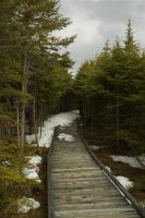 Boardwalk by LucieG-Stock