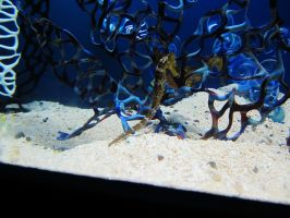 SeaHorse 4 -- Sept 2009 by pricecw-stock