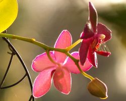 Orchid 02 by Skip1967
