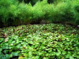 Lillypad Forest by BCAlove