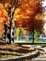 Automne Montreal II by HammerSection