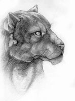 Panther by Tattered-Artemisia