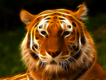 Tiger fractal by l3viathan2142