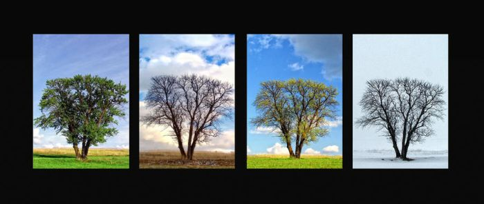Four seasons of loneliness by TodirutVlad