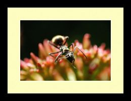 Ant Photo 7 by blookz