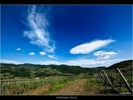 Vineyard Hills by Marcello-Paoli