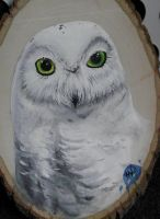 Owl on Wood by ii2eaper
