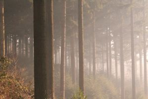 Early Morning in the Forest by JackButcherPhoto