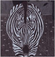 Black Paper Zebra by samrhodes