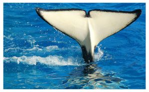 Tail of a Whale by briteddy