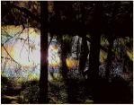 Sunlit Melted Snow in the Forest by surrealistic-gloom