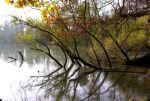 riverside wilderness by Pippa-pppx