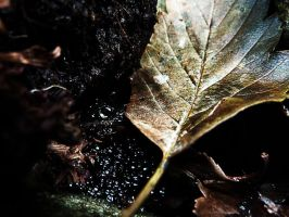 Autumn leaf with waterdrops by Viuff