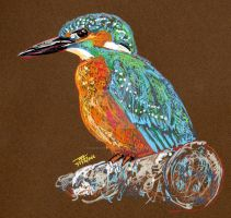 Kingfisher by dessinateur777