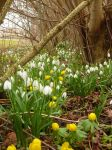 First Signs of Spring by MellieR