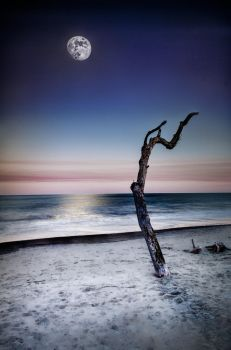Driftwood Future (photograph, double exposure) by AugenStudios