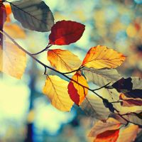 Autumn leaves by Jules1983