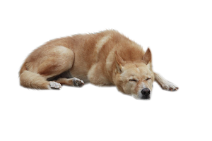 Dog PNG 2 by ShadowedxLegacy