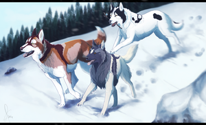 The last Snow :. - Commission for Aquene-Lupetta by StormAndFreedom