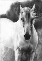White Arabian horse by Annzell