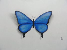 Blue Butterfly by KrizzLumino