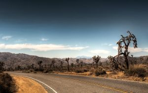 Joshua Tree National Park av myINQI