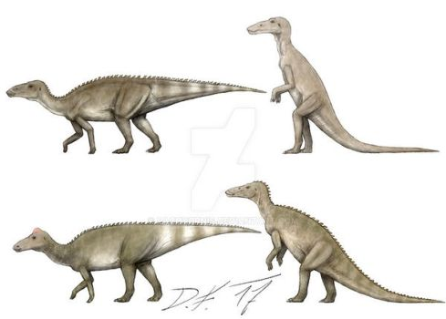 From skinny Trachodon to bulky and crested by Pachyornis