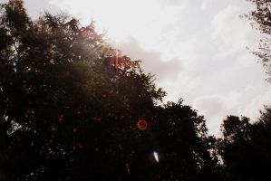Tangerines. by Julie-xxx