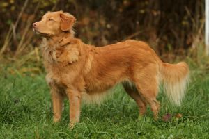 Attentive Toller by SaNNaS