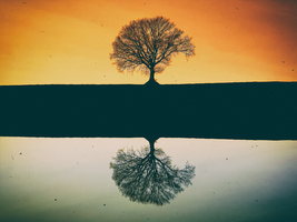 Symmetry (edit) by rhb4