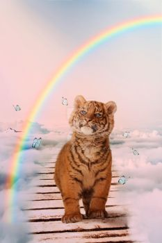 A tiger on the Rainbow Bridge by gatterwe