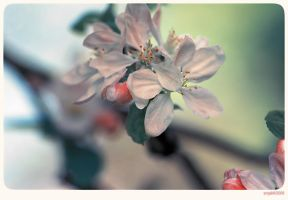 Blossom - 4 by anjali